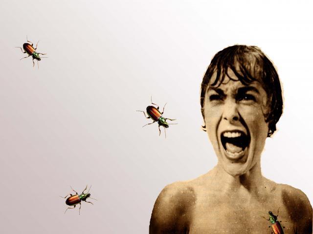 ¿Por qué la gente tiene tanto miedo de los insectos y las arañas?