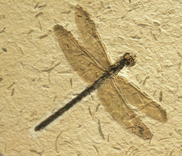 20 datos increíbles sobre insectos