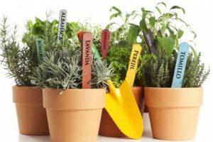 6 Plantas de interior para repeler las plagas