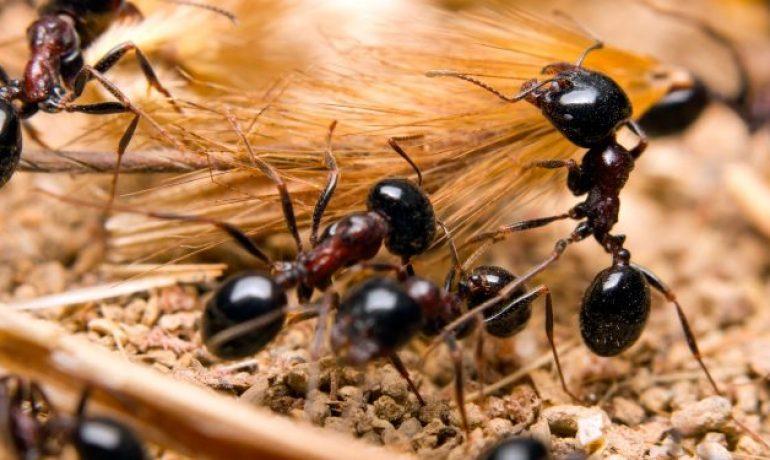 8 Datos interesantes sobre las plagas de hormigas