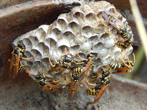 Colonias de insectos que comparten el poder del cerebro