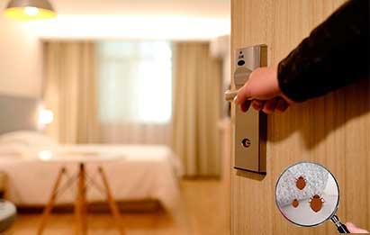 Control de chinches en albergues, hostales y hoteles.