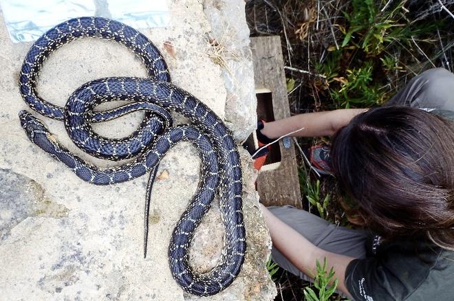 Control de serpientes