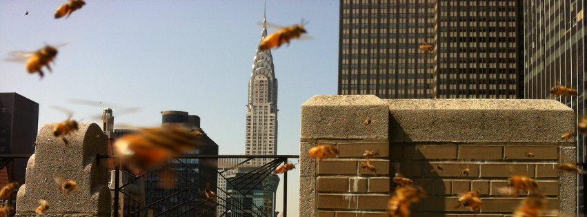 el-baile-de-las-abejas-datos-interesantes-sobre-las-abejas-que-te-sorprenderan