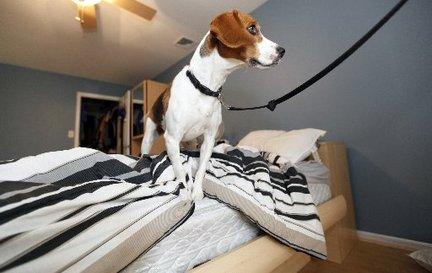 Perros detectores de chinches