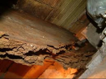 Plagas de la madera